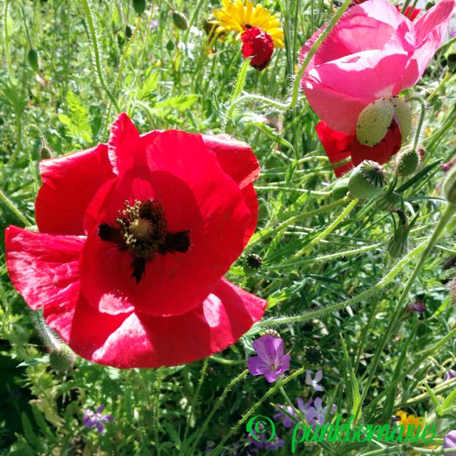 Wildblumen_1